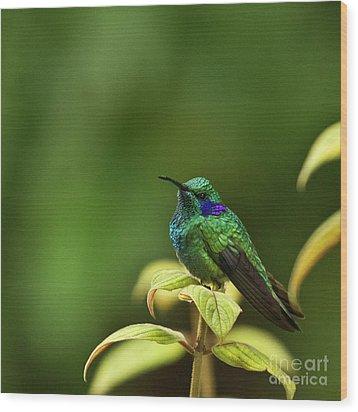 Green Violetear Hummingbird Wood Print