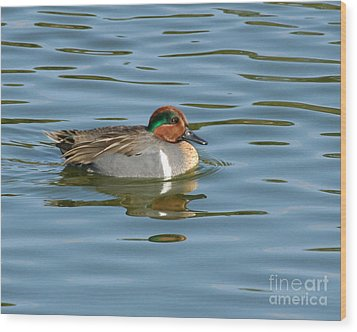 Green-winged Teal  Wood Print