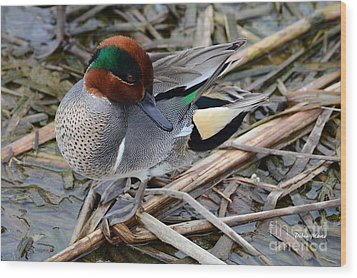 Wood Print featuring the photograph Green-winged Teal by Debra Martz