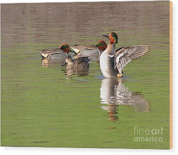 Wood Print featuring the photograph Green-winged Teals by Bob and Jan Shriner