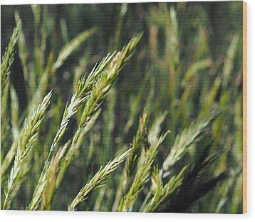 Greener Grass Wood Print by Kaleidoscopik Photography