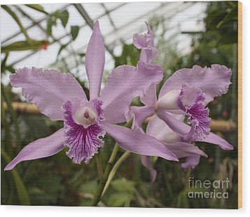 Greenhouse Ruffly Orchids Wood Print by Carol Groenen