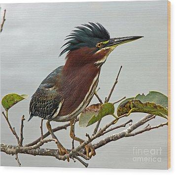 Audubon's Green Heron Wood Print