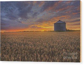 Greeting The Sun Wood Print by Dan Jurak