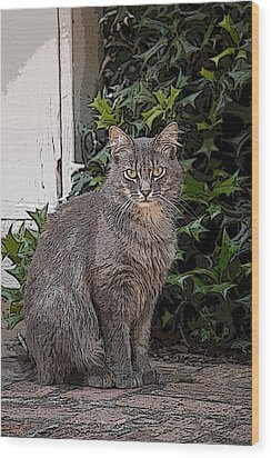 Grey Cat Wood Print