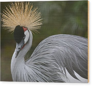 Grey Crowned Crane Wood Print by Venetia Featherstone-Witty