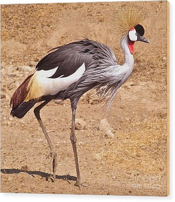 Wood Print featuring the painting Grey Crowned Crane by K L Kingston
