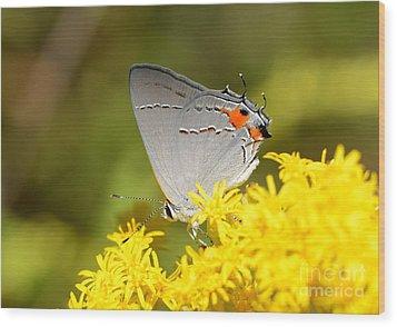 Grey Hairstreak Butterfly Wood Print by Kathy Baccari