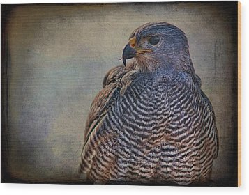 Wood Print featuring the photograph Grey Hawk by Barbara Manis