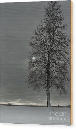 Grey Morning Wood Print by Steven Reed