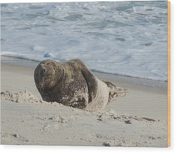 Grey Seal Pup On Beach Wood Print by Kimberly Perry