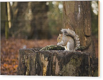 Grey Squirrel On A Stump Wood Print by Spikey Mouse Photography
