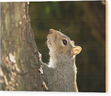 Wood Print featuring the digital art Grey Squirrel by Ron Harpham