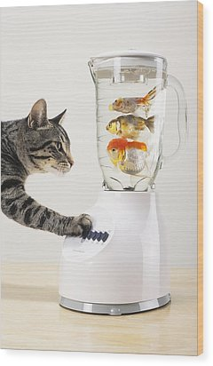 Grey Tabby Cat With Paw On Blender Wood Print by Thomas Kitchin & Victoria Hurst