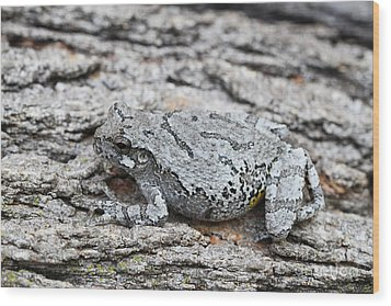 Wood Print featuring the photograph Cope's Gray Tree Frog by Judy Whitton