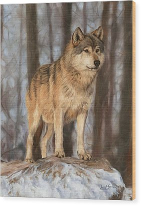Grey Wolf Wood Print by David Stribbling
