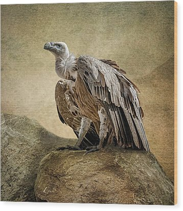 Wood Print featuring the photograph Griffon Vulture by Brian Tarr