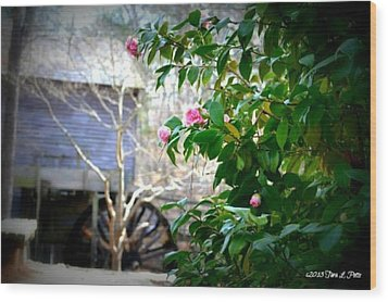 Wood Print featuring the photograph Grist Mill Roses by Tara Potts