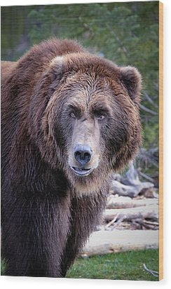 Wood Print featuring the photograph Grizzly by Athena Mckinzie