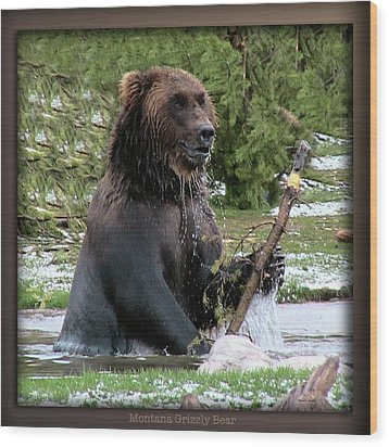 Grizzly Bear 08 Wood Print by Thomas Woolworth