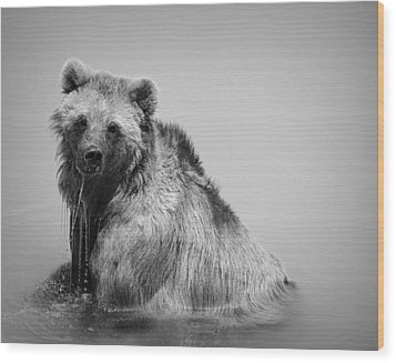 Grizzly Bear Bath Time Wood Print by Karen Shackles