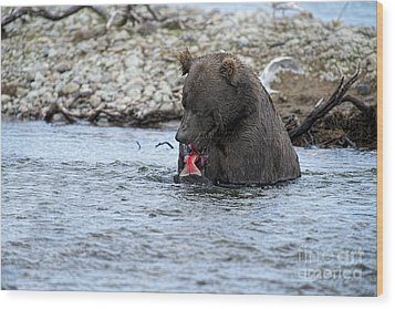 Brown Bear Eating Salmon Wood Print by Dan Friend