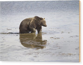 Grizzly Bear In Muddy Water Wood Print by Mike Cavaroc