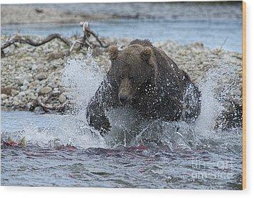 Brown Bear Pouncing On Salmon Wood Print by Dan Friend