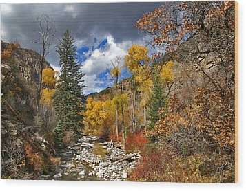 Grizzly Creek Cottonwoods Wood Print