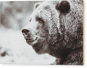 Grizzly In Black And White Wood Print