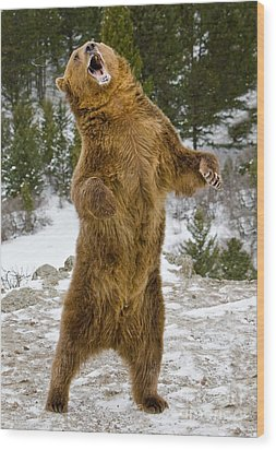 Wood Print featuring the photograph Grizzly Standing by Jerry Fornarotto
