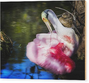 Preening Spoonbill Wood Print by Mark Andrew Thomas