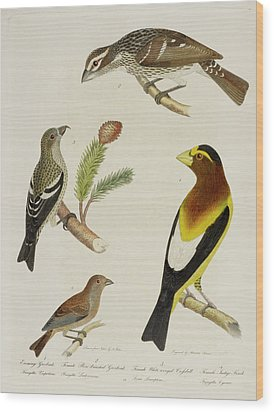 Grosbeak And Crossbill Wood Print by British Library