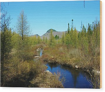Wood Print featuring the photograph Groton State Forest Moose Country by Sherman Perry