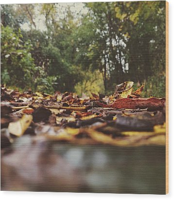 Wood Print featuring the photograph Ground Level Leaves by Nikki McInnes