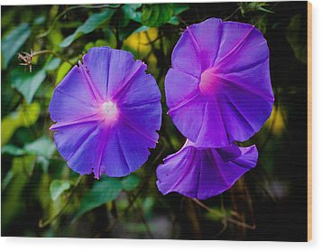 Ground Morning Glory Singapore Flower Wood Print by Donald Chen
