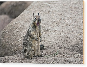 Ground Squirrel Raising A Ruckus Wood Print by Susan Wiedmann