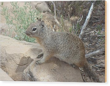 Ground Squirrel Wood Print