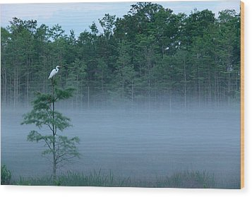 Grounded Egret Wood Print