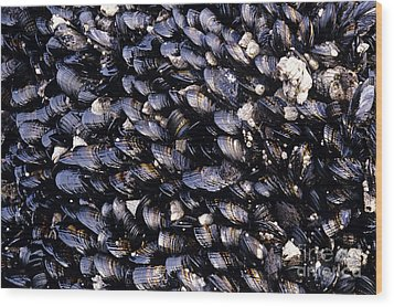 Group Of Mussels Close Up Wood Print