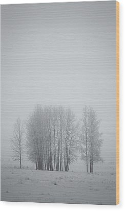 Grove Of Trees Covered In Hoar Frost On Wood Print by Roberta Murray