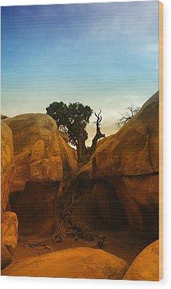 Growing Between The Rocks Wood Print by Jeff Swan