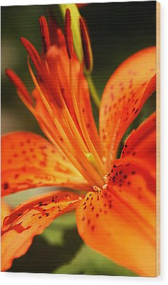 Growing Flame Wood Print by Kim Lagerhem