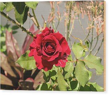 Growing Rose Wood Print by Zina Stromberg