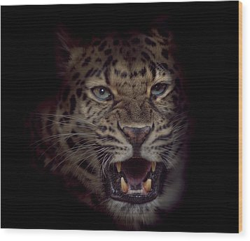 Wood Print featuring the photograph Growl by Cheri McEachin