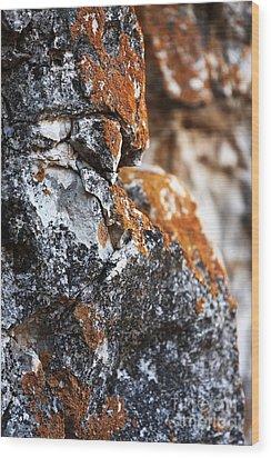 Growth Wood Print by John Rizzuto