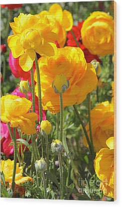 Growth Of A Ranunculus Wood Print by Suzanne Oesterling