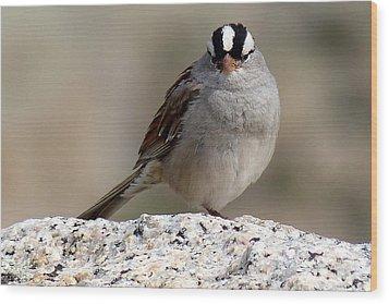 Grumpy White Crowned Sparrow Wood Print