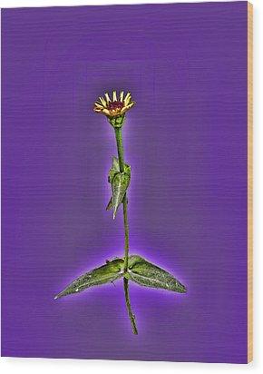 Grunge Flower - Zinnia Wood Print by Larry Bishop