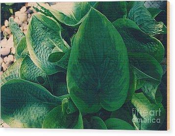 Guacamole Hosta Wood Print
